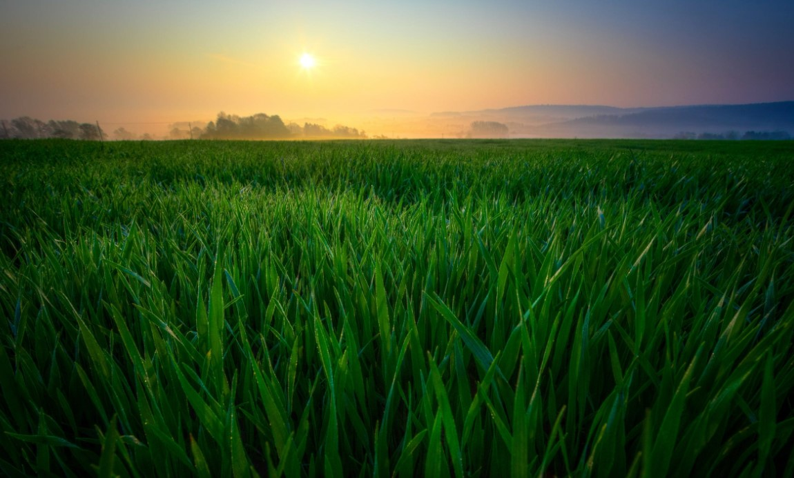 How to Buy Agricultural Land in India – Process & Documents 1